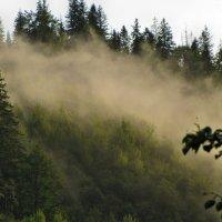 Утренний туман :: Игорь Мукалов