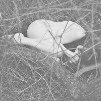 Гнездо :: Александра Витушкина