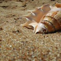 отдых на песке :: Аня Петренко
