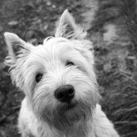 Собака :: Маша Путина