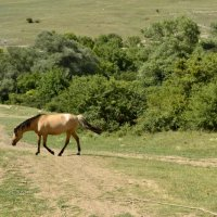 лошадка :: oleg trigubov