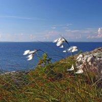 Ветер :: Максим Судаков