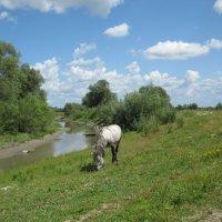 Лошадь в облаках :: Виктория Минаева