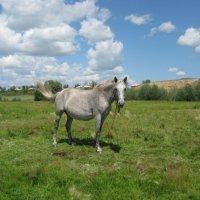 Лошадь в облаках-2 :: Виктория Минаева