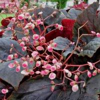 Тоже цветок :: Наталья Нарсеева