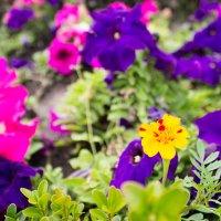 цветы :: Сергей Стефанив