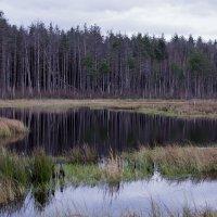 Осень сбрасывает краски :: Сергей Никитин