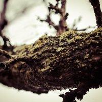 Autumn tree :: Алексей Савченко