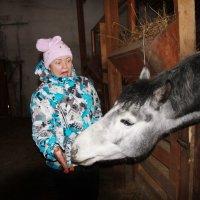 Очень страшно ... кормить лошадь :: Евгений Спицын