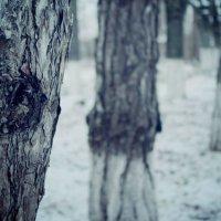 Зима :: Екатерина Саенко