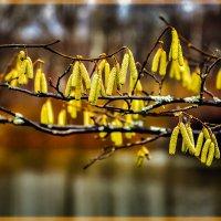 Осенние сережки :: Анатолий 71