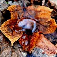 Осень это сны листопада :: Анна Андреева