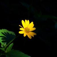Blossom :: m.r. Keeper
