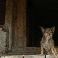 Старец острова Свияжск :: Venera Shafigullina