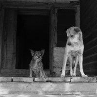 Старец острова Свияжск и его друг :: Venera Shafigullina