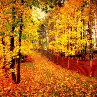 Осенний забор. :: Lidija Abeltinja