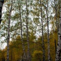 После дождя :: dmitriy-vdv