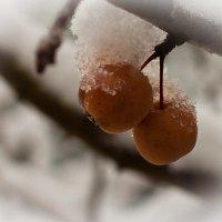 Замёрзнут напрочь... :: Сергей