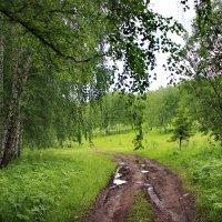После дождя. :: Наталья Юрова