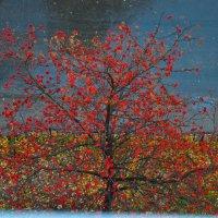 Красная рябина под моим окном :: Светлана