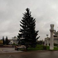 ВВЦ, фонтан дружбы народов, центральный павильон :: Кот Шредингера