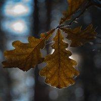 осень :: валерий киреев