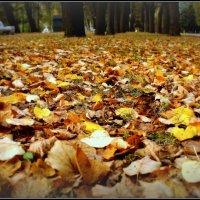 Осень :: Алексей Астафьев