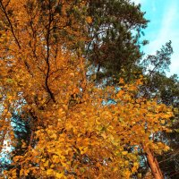 яркие краски осени :: Любовь Анищенко