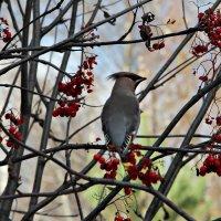 Осенняя птичка :: Мария Скородумова
