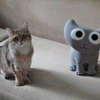 Котики могут быть разными :: Светлана Колчина