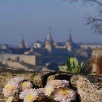 Цветок на камне! !  !   !     ! :: Родион Плугатаренко