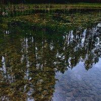 Лесное озеро :: Георгий Столяров