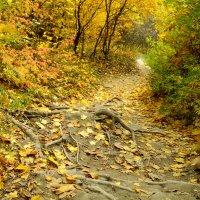 Осенняя :: Юлия Кулиш