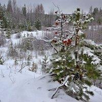 ноябрь уж у двора... :: Елена Третьякова