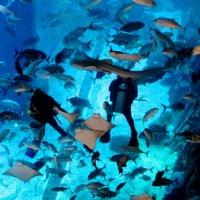 Вальс Голубой  Дубай :: Ирина Сивовол
