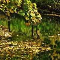 Засмотрелась осень в зеркало пруда :: Светлана Шестова