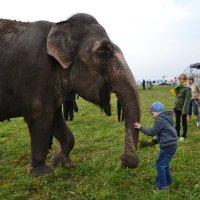 хороший слоник :: Светлана Причепа