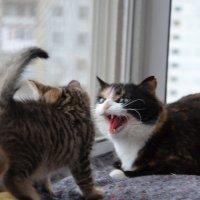 Моя гостеприимная кошка приветствует котенка :) пугает, но не обижает :: Алла )