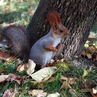 белка в парке :: Алена Горб