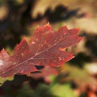 Осеннее макро :: Диана С