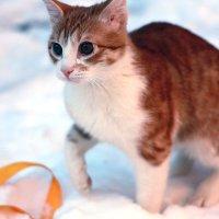 Кот рыжик :: Алена Горб