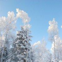 Сказочный лес2 :: Valeriy Somonov