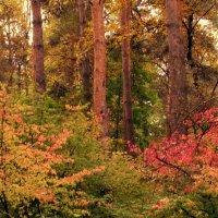 Просто лес :: Олег Чумак