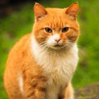 Кот, который жил в Калининграде :: Дарья Клинкова