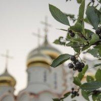 На фоне черноплодной рябины.. :: Мария Миргородская
