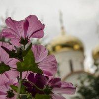Через цветы.. :: Мария Миргородская