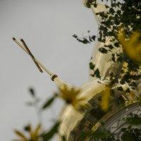 Сквозь цветы.. :: Мария Миргородская