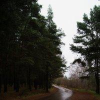 Путь в сказку :: Мария Кузнецова