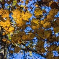 осень :: Sergey Bagach