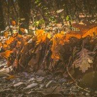 ...намыло ливневым потоком :: Sergey Bagach